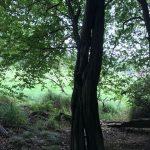 Haiger - Landschaftspanorama